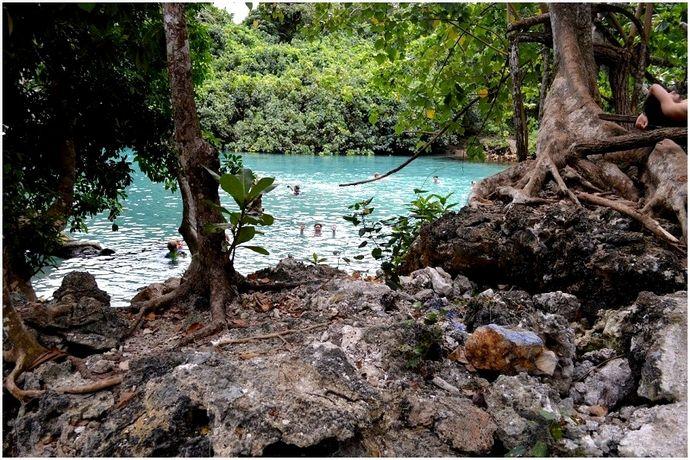 Как выжить в джунглях: руководство для искателей приключений