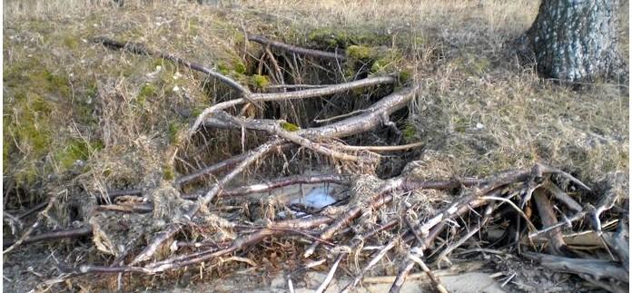 Импровизированные укрытия и убежища из ветвей, корней и упавших деревьев, использование естественных углублений в земле.