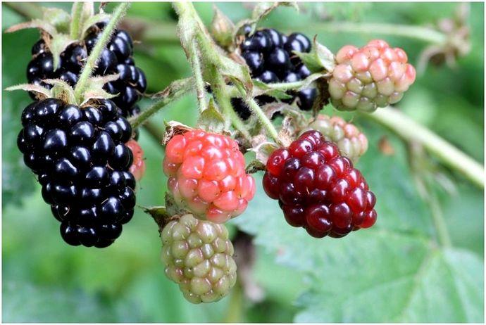 Дикие растения, которые вы можете съесть: устойчивая пища природы