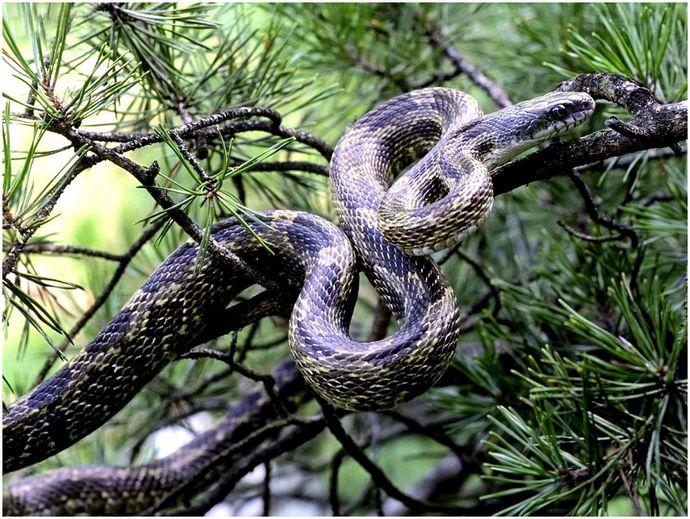Как сделать ловушку для змей: советы о том, как ловить змей на природе
