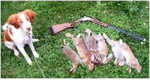 Что нужно знать о том, как охотиться на кроликов