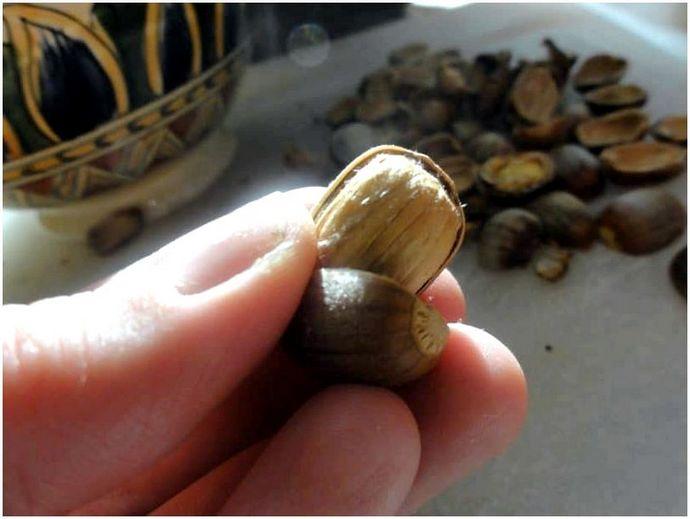 Можете ли вы есть желуди: новый ореховый аромат?