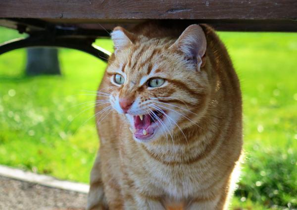 Первая помощь для кошек: дорожно-транспортные происшествия и наезд на кошек