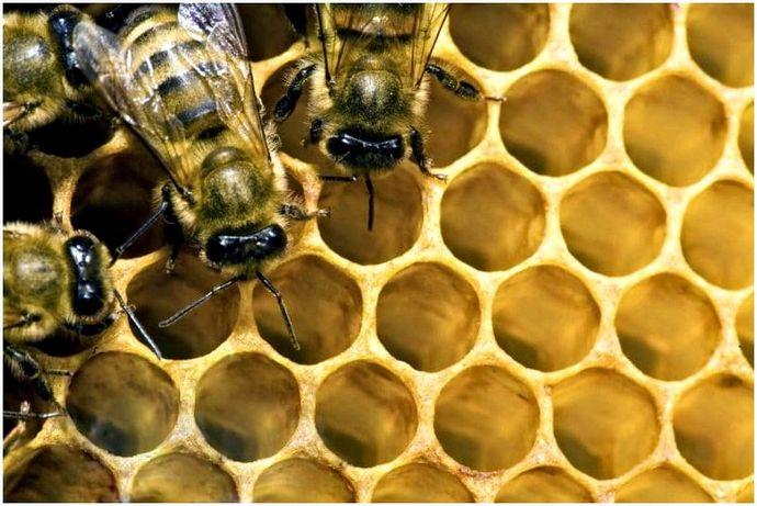 Пчеловодство для начинающих: что это такое?