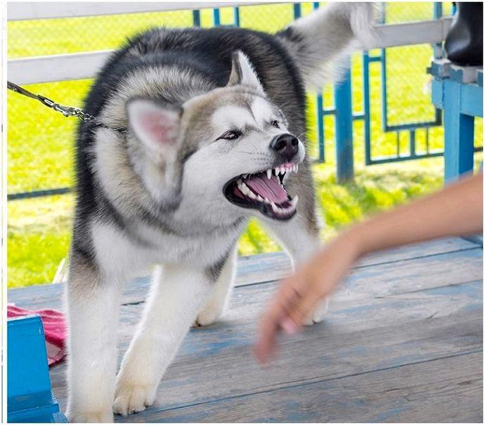 Лечение укуса собаки: как оставаться в безопасности