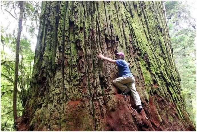 Как залезть на дерево: разные методы для сложной работы