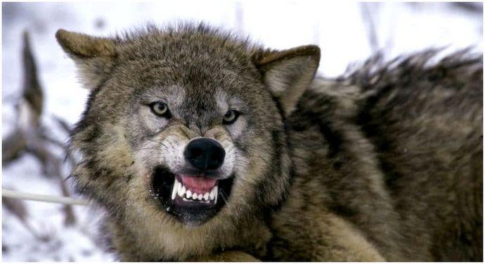 Как избежать нападения диких животных: выжить на улице