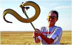 Как сделать змеиную ловушку: научиться ловить змею