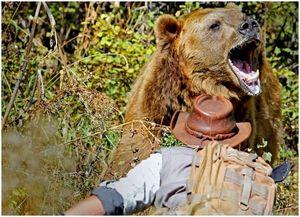 Как пережить нападение медведя и остаться в живых: экспертные приемы