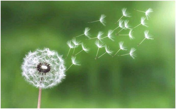 Дикие растения, которые вы можете съесть: список съедобных диких растений