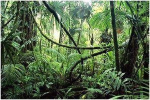 Как выжить в джунглях