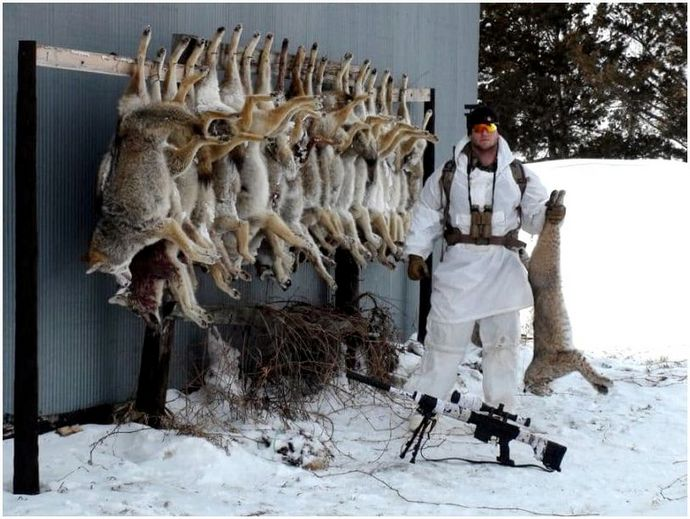 Охота на хищников: поведение и тип, советы и снаряжение