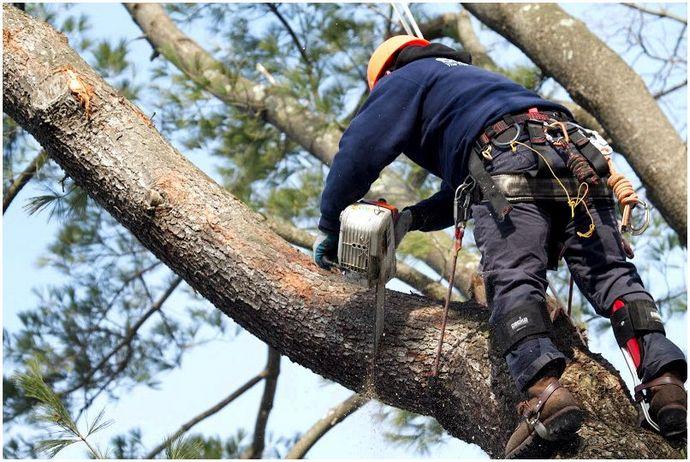 Оборудование для лазания по деревьям: Качественное оборудование для максимальной безопасности