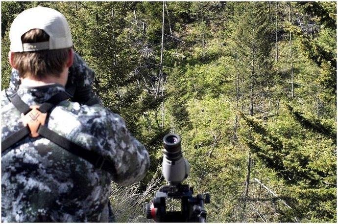 Советы по охоте на медведя: оставайтесь в безопасности на охоте (советы экспертов)