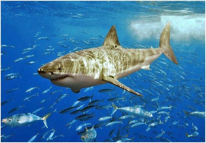 Как пережить нападение акулы: опасность в океане