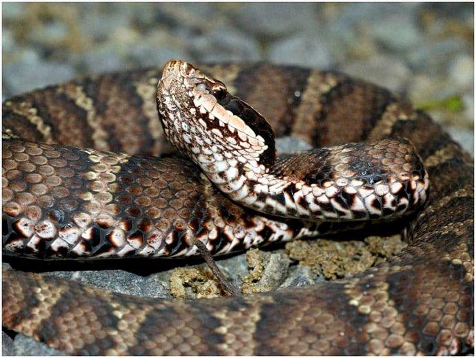 Самые ядовитые змеи в мире: вершина ядовитых змей
