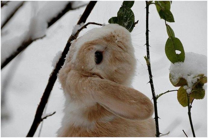 Советы по охоте на кроликов: как охотиться на кроликов (совет специалиста)