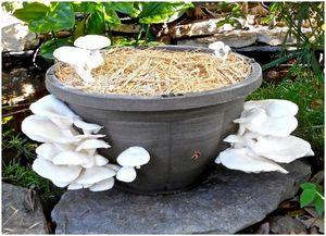 Как вырастить грибы: полное руководство для начинающих