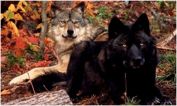 Выживание в лесу дикой природы: советы, хитрости и шаги, необходимые для выживания