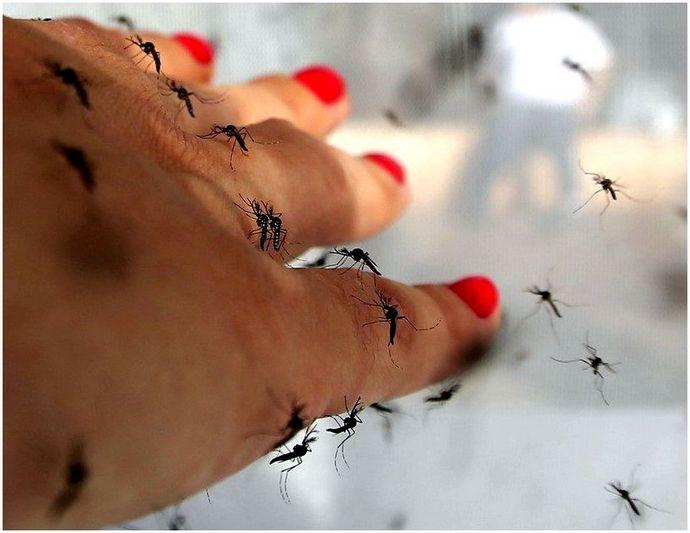 Лучшие средства от комаров: лучшие средства от комаров и советы