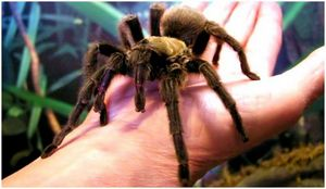 Лечение укусов пауков: профилактика и неотложная помощь