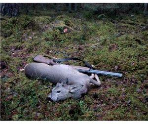 В Хакасии активно ловят браконьеров