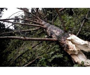 В Костромской области рыбак погиб под упавшим деревом