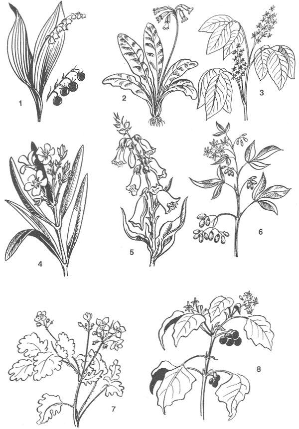 РИС. 79. Ядовитые растения: 1 - ландыш майский, 2 - первоцвет весенний, 3 - сумах ядовитый, 4 - олеандр обыкновенный, 5 - наперстянка красная, 6 - паслен сладко-горький, 7 - чистотел, 8 - паслен черный