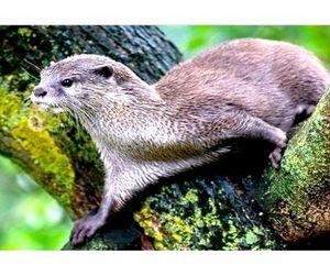 Установлены сроки летне-осенней охоты в Новгородской области