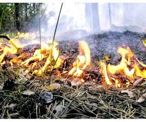 Эпидемия лесных пожаров в Амурской области