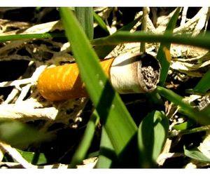 По ДНК  с окурка сигареты установлена личность браконьера