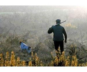 Нижегородским охотникам придётся выбирать, где охотиться