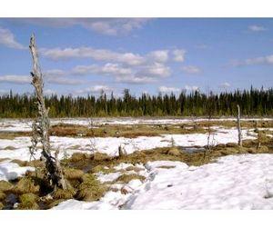 28 февраля - дата окончания осенне-зимнего охотничьего сезона в Коми