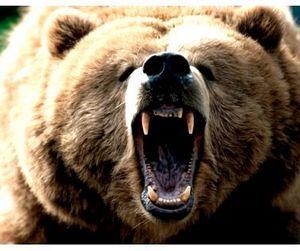 Охота на медведя может быть запрещена полностью