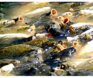 Рыбное хозяйство Московской области получит удвоенное финансирование