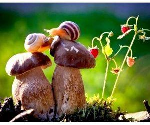 Отправляясь за грибами, будьте осторожны!