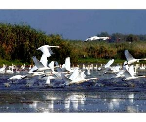 В дельте Дуная охота  будет запрещена