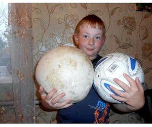 Оренбургский школьник нашел гриб размером с футбольный мяч