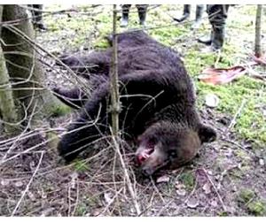 Пастух убил медведя ножом, защищая своих лошадей