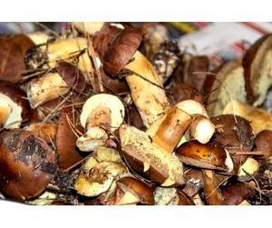 В Курской области запрещена продажа дикорастущих грибов