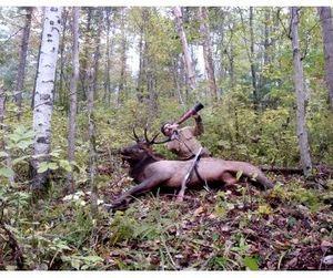 Начало охоты на копытных 15 октября