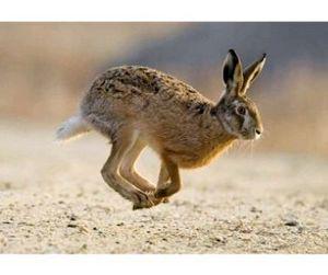В Николаевской области началась охота на зайца-русака