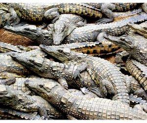 Пострелять крокодилов в Австралии