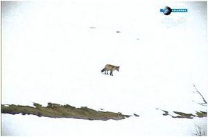 Добыча пропитания в Арктике
