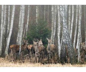 Как судят браконьеров в Литве