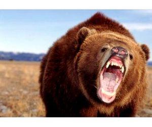 В Удмуртии впервые разрешена весенняя охота на медведей