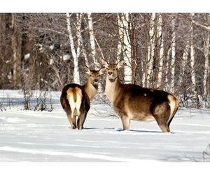 Браконьеры приближают закон о полном запрете на охоту
