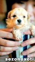 Охотничья собака занимает третье место в топ-5 самых дорогих пород мира