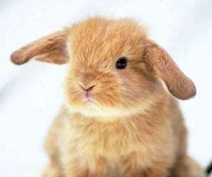Всемирный день животных прошел 4 октября