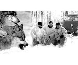 Якутские охотники уничтожили 161 волка